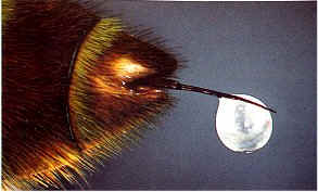 Biene Imkes Kinderseiten Ich Zeige Dir Meine Welt